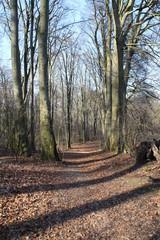 Ein Waldweg im Frühjahr