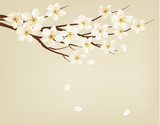 Blossoming tree branch with spring flowers. Vector illustration. - 79693543