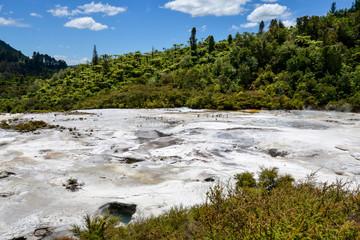A scenic rainforest landscape in Orakei Korako geothermal park