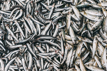 The European anchovy pattern on Istanbul market.