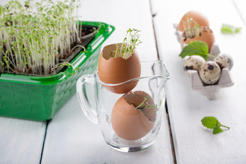 Young seedlings of cress salad in an eggshell.