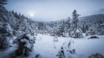 Wälder im Tiefschnee