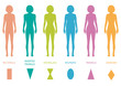 female body types anatomy,woman front figure shape, vector - 79703329