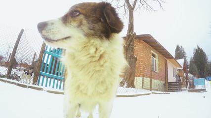 Muzzle dog