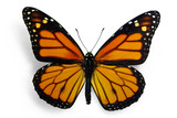 Monarch (Danaus plexippus), a migrant butterfly poster