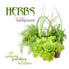 Herbs: dill, parsley, lettuce, onions