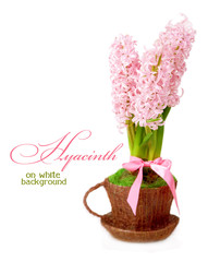 Hyacinth in a cup on a white