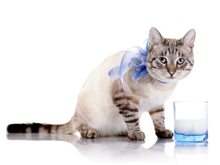 Striped cat with a blue bow and a glass of milk.