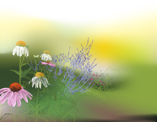 Garden, glorious summer morning background