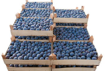 Fresh plums in a crates