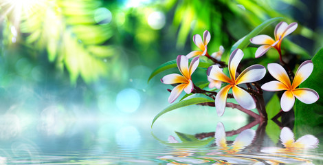 zen garden with frangipani and vapour on water
