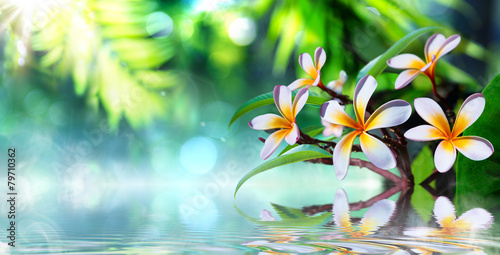 Staande foto Frangipani zen garden with frangipani and vapour on water