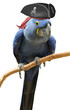 Cool and unusual pirate parrot bird portrait - 79710924