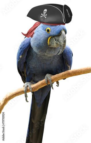 Poster Cool and unusual pirate parrot bird portrait