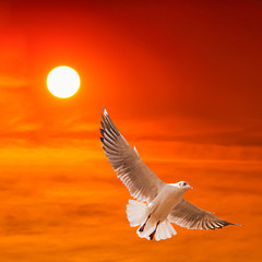 seagull flying against beautiful sunset background