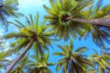 Fototapety Palm treeі with sunny day. Thailand, Koh Samui island.