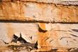 Rotting ship planks