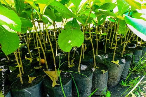 trees green  seedlings Plant - 79715964