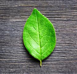 Green leaf lying on black wooden board