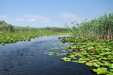 Lake with water lilies in the Danube delta, Romania