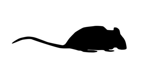Ratte Silhouette