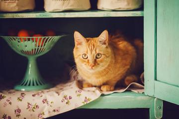 Funny cat sits in a rural closet. Hide And Seek
