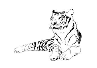 vector of tiger