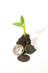 The plant grows from a pile of soil and coins on a white backgro