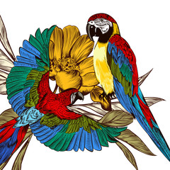 Engraved background with colorful tropical parrots