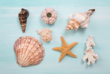 Maritime nautische Dekoration mit Muscheln und Seestern