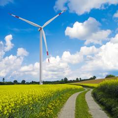 rapsfeld landschaft mit windrad