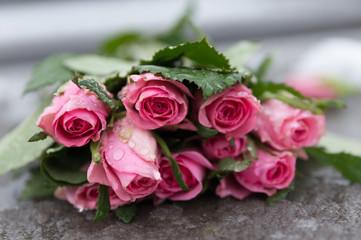 Rosen wunderschön