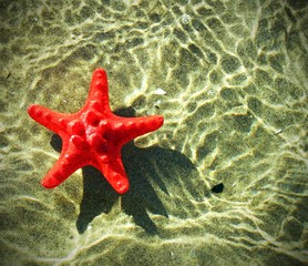 and rare red starfish floating on the ocean
