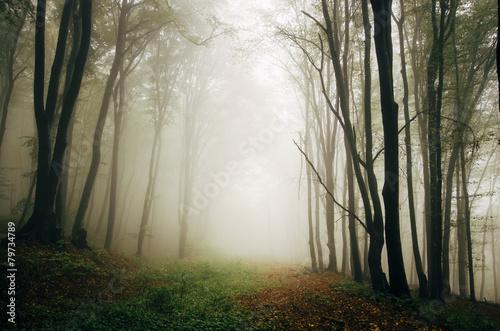 green forest natural spring landscape © andreiuc88