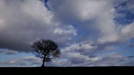 Wolken ziehen über einen Baum - Timelapse
