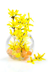 Spring yellow flowers in bowl with water balls