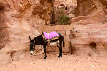 Jordan, Petra. Donkey as local transportation