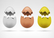 white brown and golden broken separated eggshell collection - 79739966