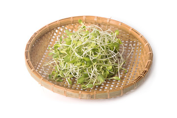 green young sunflower sprouts in the basket