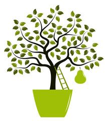 pear tree in pot