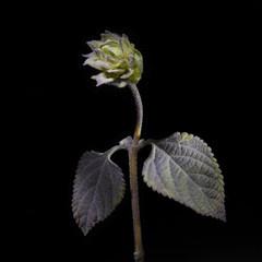 Flor y fondo negro