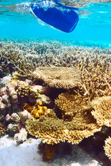 Coral reef and paddle underwater