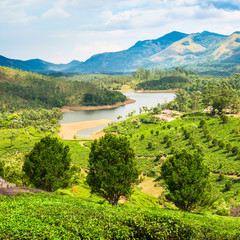 beautiful landscape of tea plantation with mountains and river i