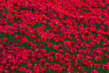 London - Tower of London poppies remembrance World War 1