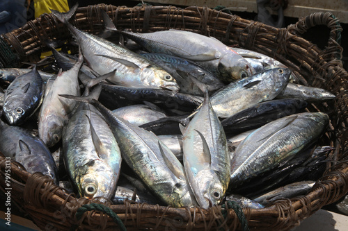 Fishes on the basket - 79753133