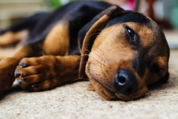 Sweet little puppy outdoors