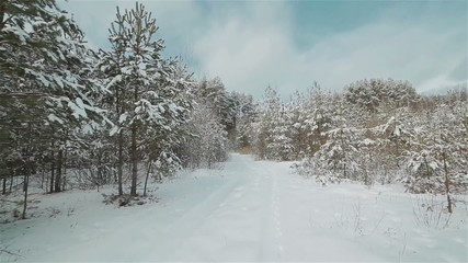 Moving on a snowy white road across the winter forest