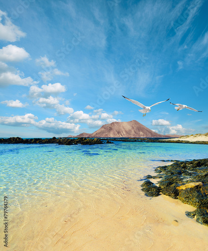 Foto op Canvas Canarische Eilanden Wild seashore in Fuerteventura