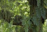 Luz e sombra do verde das folhagens
