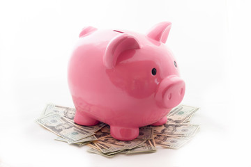 Pig piggy bank with dollars